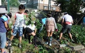 手を結んで、実を結ぶ ~地域と一緒に学校花壇をフル活用!!~